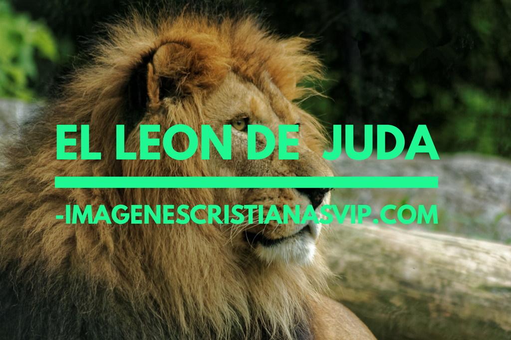 el-leon-de-juda-imagenes-crisitanas